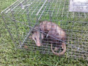 Houston Animal Removal